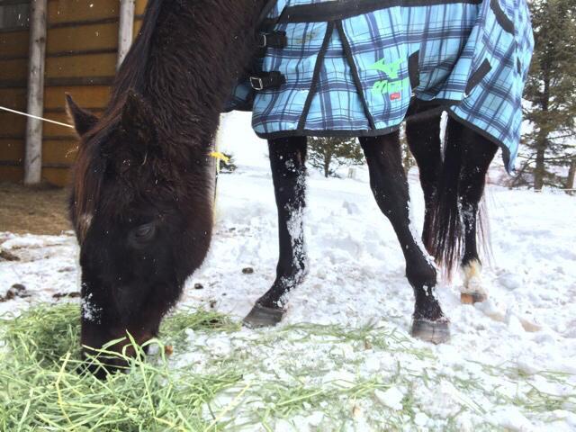 horsey04-03-2016-1