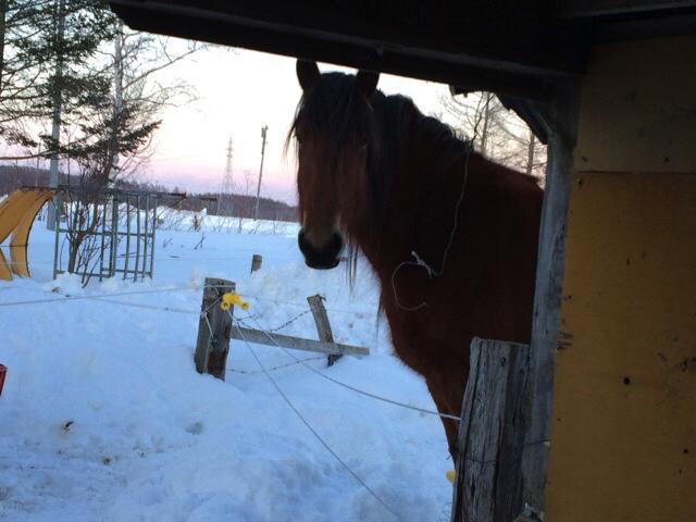 horsey04-03-2016-11